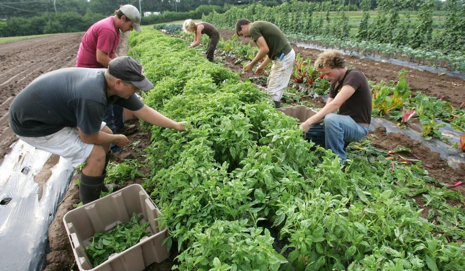 an analysis and clarification of the myths surrounding organic farming According to the bureau of economic analysis,  every state surrounding north carolina had a lottery in operation  myths and realities.